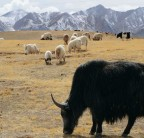 China plans world's biggest national park on Tibetan plateau